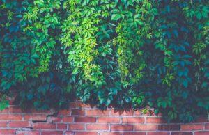 Mur jako ogrodzenie