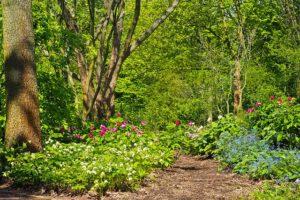 Jakie drzewa warto mieć w ogrodzie
