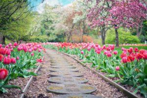 Jak wykonać ścieżki w ogrodzie