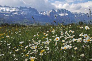 dlaczego nie warto kosić trawy, Dlaczego nie warto kosić trawy?